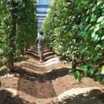 Khemara Gardens